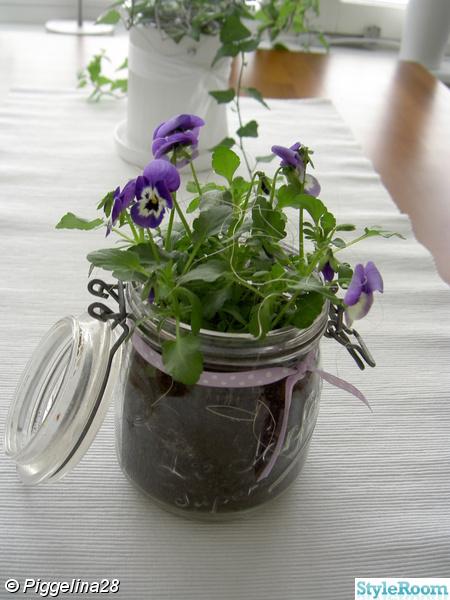 penseer,glasburk,lilla,kök,blommor,vår,sidenband